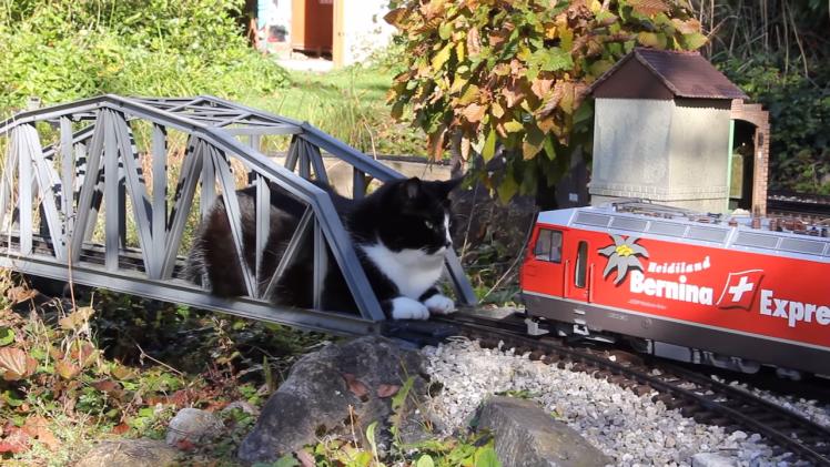 Cat vs Garden Train