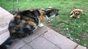 Cats Defend Human's House From Neighbors Dog