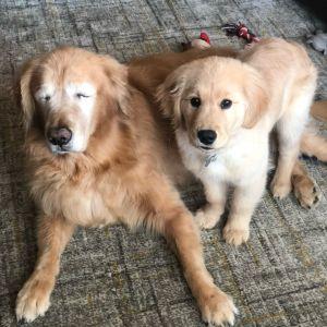 Charlie and Maverick Seeing Eye Dog
