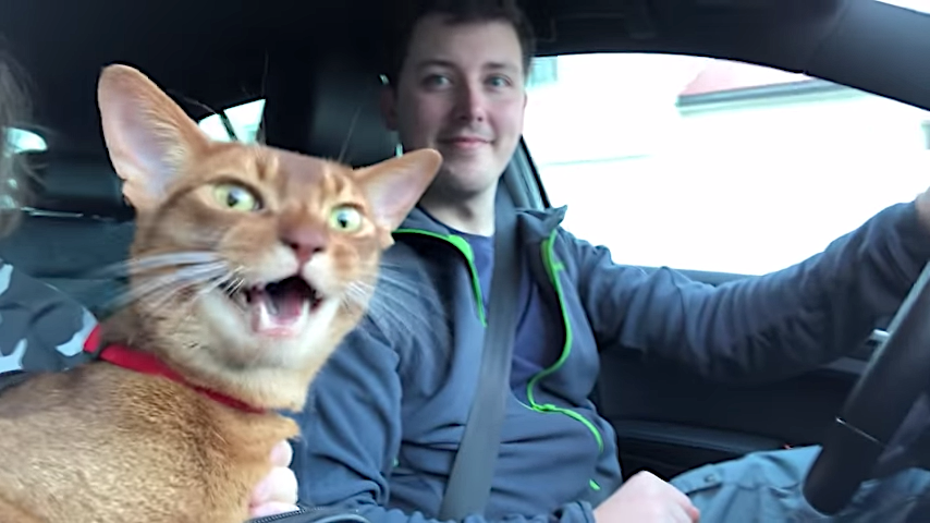 Cooperative Cat Chimes in With an Almost Perfectly Timed Meow During 'If You're Happy and You Know It'