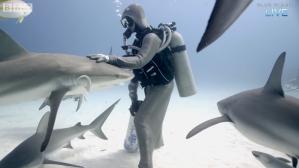Petting Sharks Like Dogs