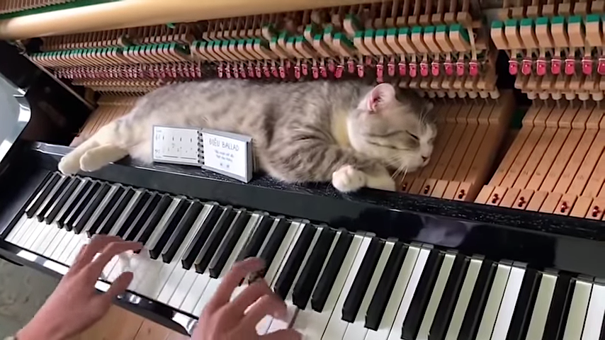 Weary Cat Tries to Sleep Next to the Hammers of a Piano While a Human Plays a Boogie-Woogie Tune