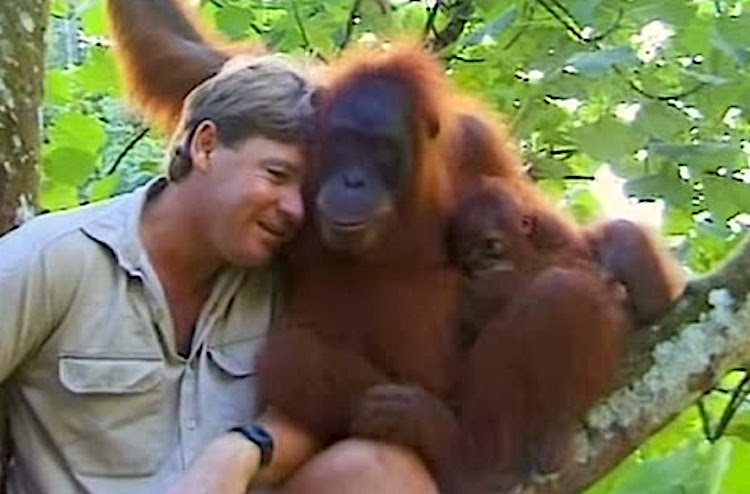 Steve Irwin Shares an Incredibly Tender Moment in 1997 With a Trusting Orangutan Mother and Her Baby