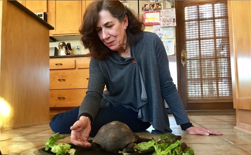 Woman Spends 56 Years With a Beloved Tortoise Who Was Given to Her on Her Tenth Birthday in 1962