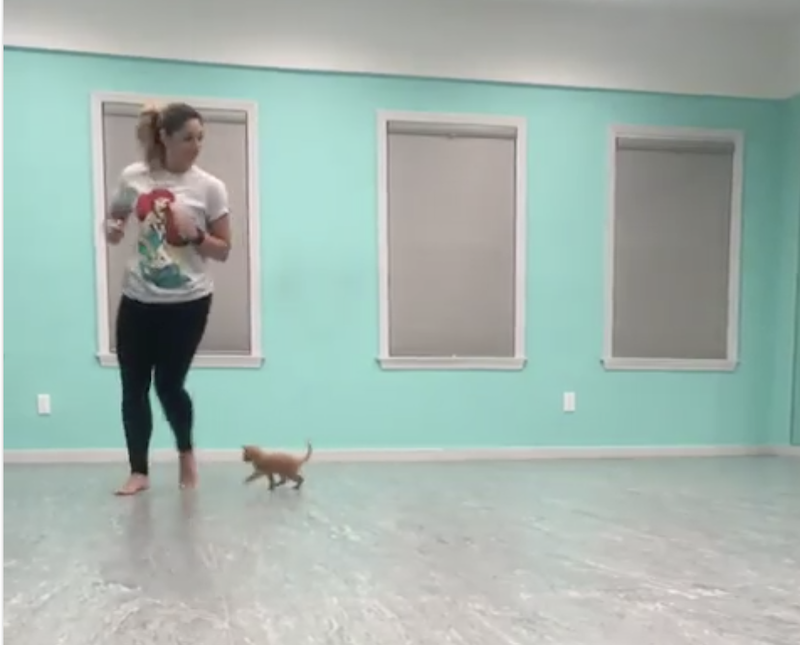 A Tiny Blind Kitten Learns How to Follow His Human Around the Room Through Touch, Sound and Smell