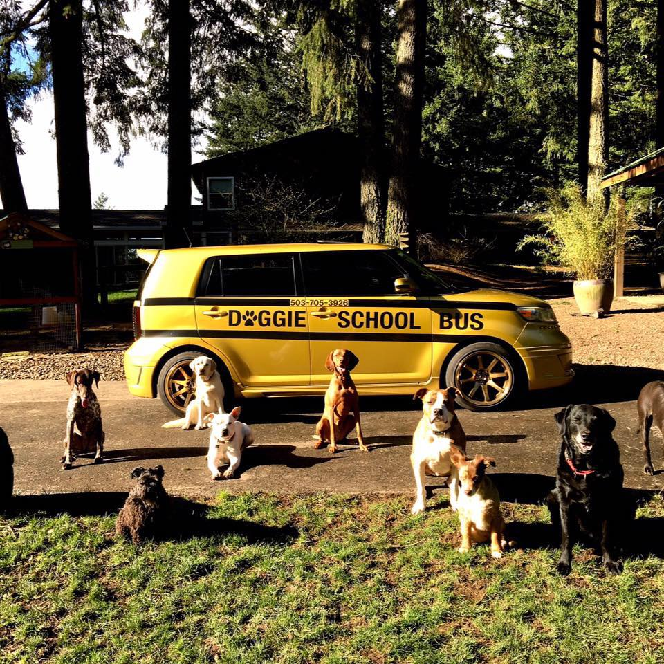 Enterprising Oregon Man Picks Up Local Canine Clients for Daycare in a Bright Yellow Doggie School Bus