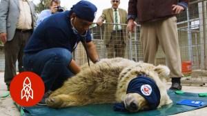 Dr Amir Khalil Rescue Animals Amman Jordan