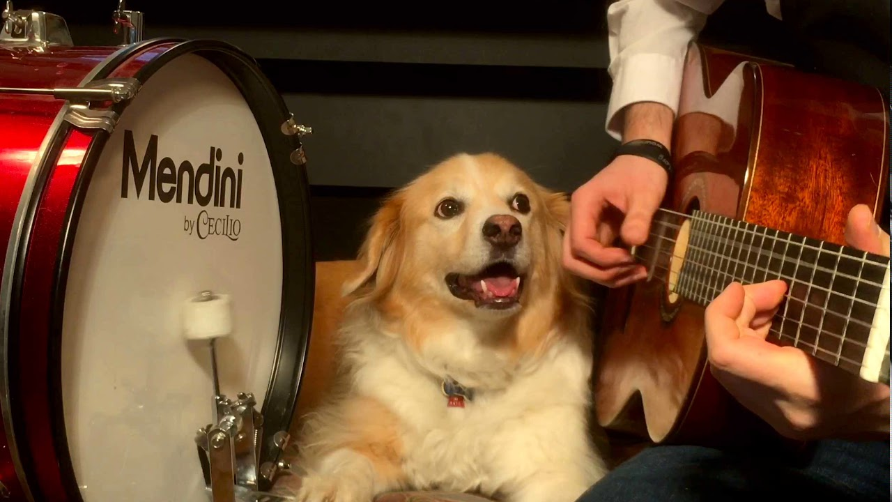Jaunty Acoustic Guitar Cover of the Star Wars Cantina Song With an Adorably Rhythmic Dog on Drums