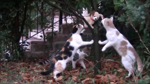 Outdoor Cats Meowing Dog