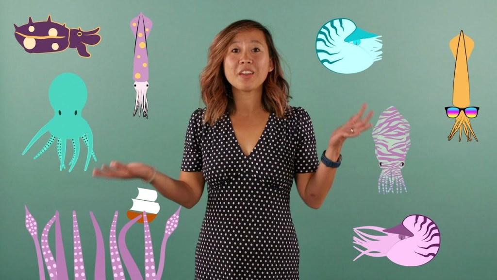 Samantha Cheng Cephalopod Facts ABCs