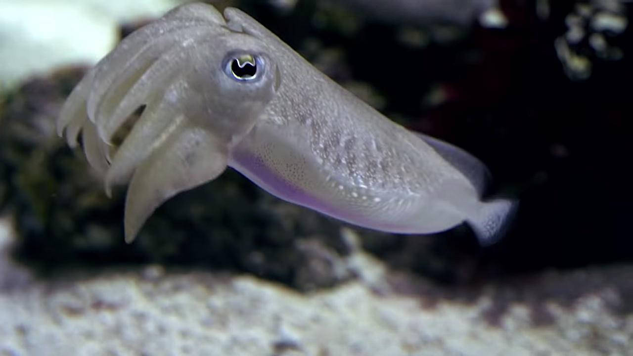 Scientists Share Why They Love Cephalopods So Much