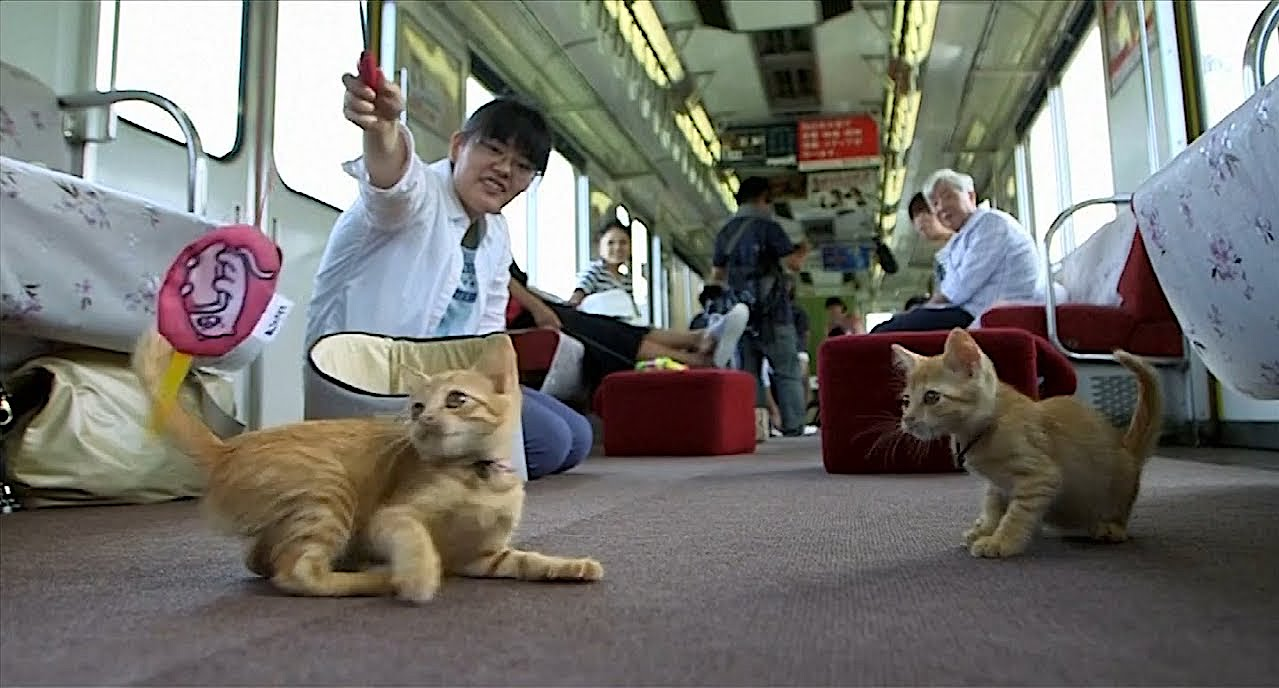 Japanese Railway Hosts World's First Cat Cafe on a Moving Train With Adoptable Kittens Riding on Board