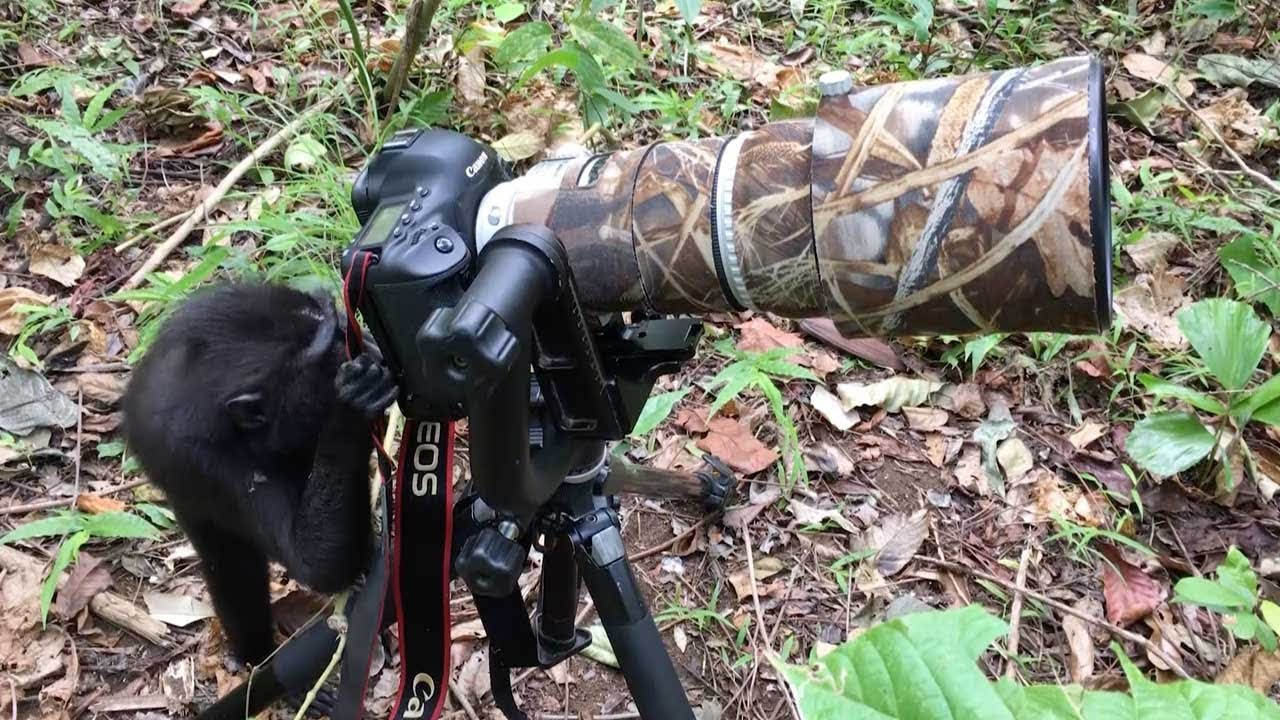 Curious Monkey Tries Out Photographer's Camera
