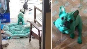 Green French Bulldogs