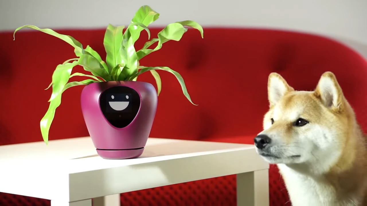 Lüa, A Smart Planter That Expresses What a Plant Needs and When It Needs It Using Animated Emotions
