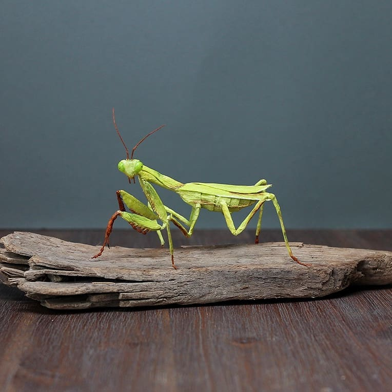 Incredibly Realistic Hand Crafted Paper Insects