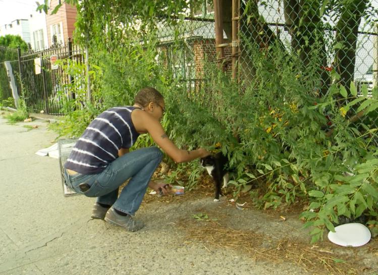 Sassee Feral Cat