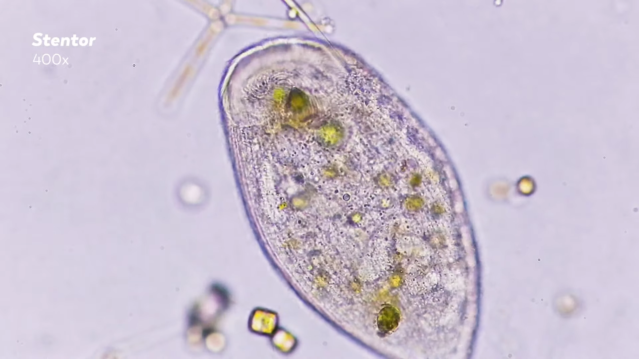Journey to the Microcosmos, A Fascinating Video Series About the Various Forms of Microscopic Life