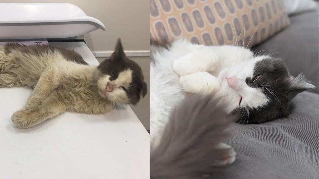 Teddy Cat Brooklyn Flatbush Rescue