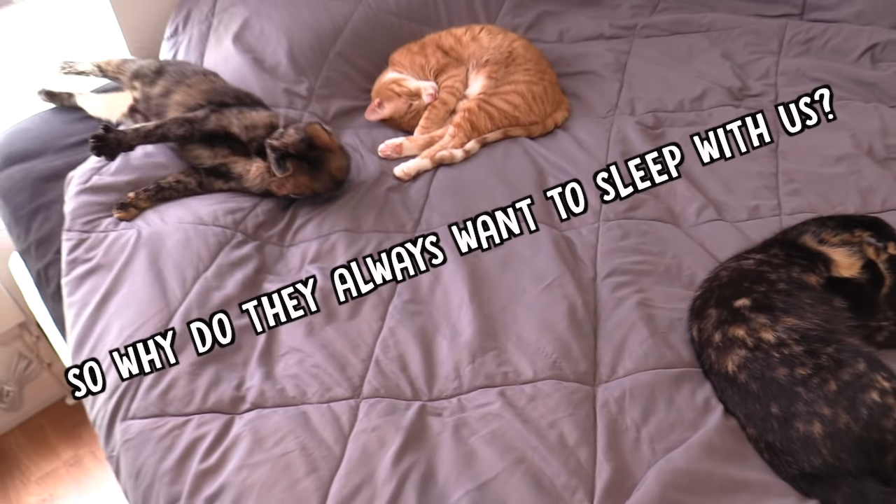 Why Cats Like to Sleep in Bed With Their Humans
