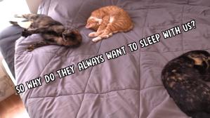 Cats Like To Sleep With Humans