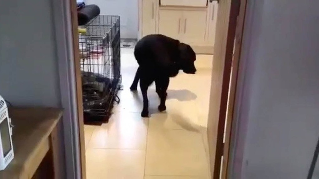Dog Only Walks Backwards Through Doors