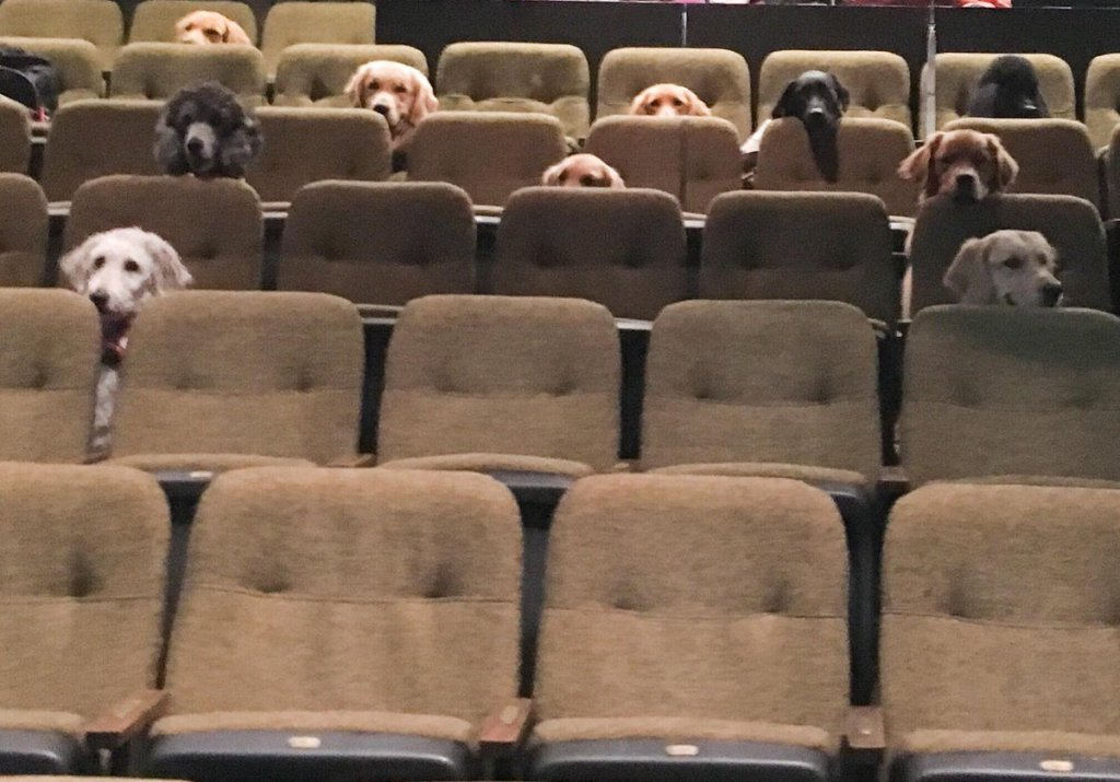Dogs at the Theater