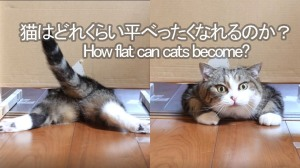 How Flat Can Cats Become