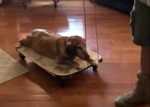 man builds special Cart for 13 year old dog with arthritis
