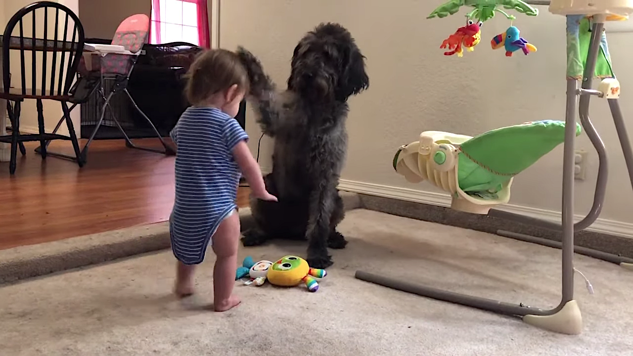 Dog Gently Forces an Indecisive Toddler to Sit Down