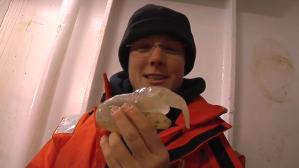 Mysterious Antarctic Creature