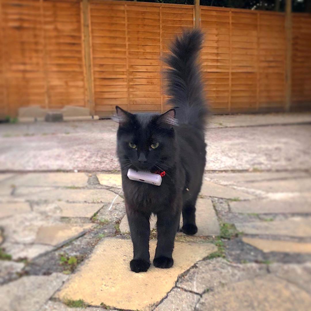 Ralph the Cat GPS Tracker