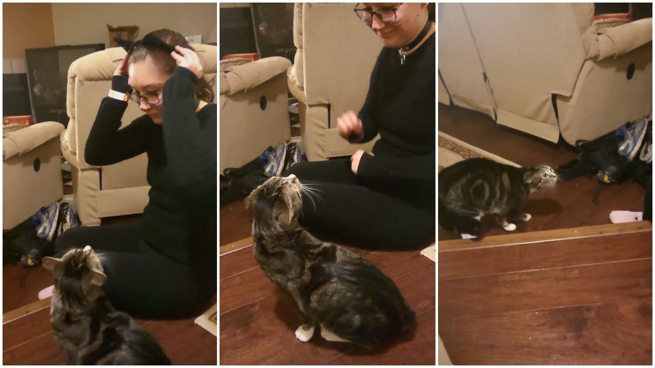 Cat Scared of Human Wearing Cat Ears