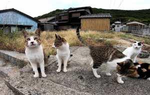 Cats on Cat Island