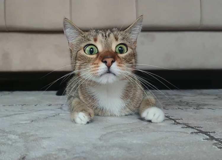 Kitten Watching Horror Films