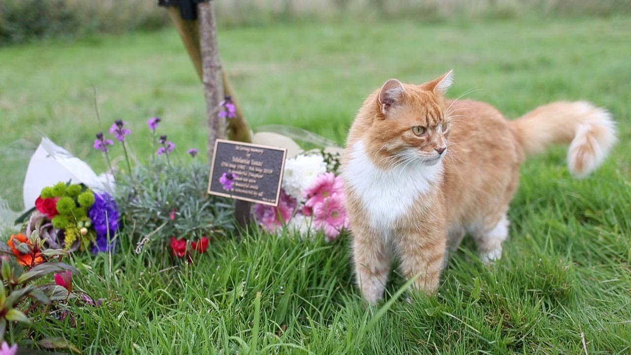 An Intuitive Orange Cat Comforts Mourners at Funerals