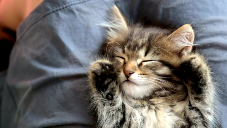 Researcher Explains How Cats Bond With Their Humans
