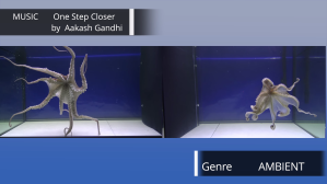 Will Octopuses React to Music