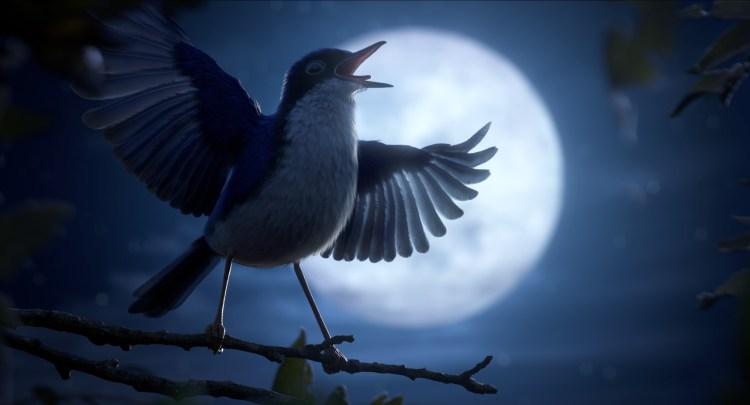 Bird Aria