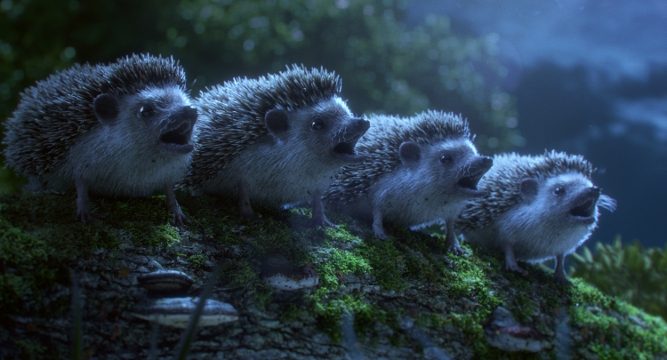 Hedgehog Chorus