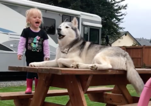 Little Girl and Her Dog Carry on Loud Conversation Together