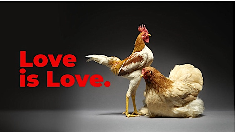 A Beautiful Book That Captures the Diversity of Love as Told Through Photos of Exotic Chicken Couples