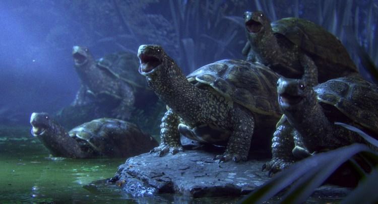 Turtles Sing