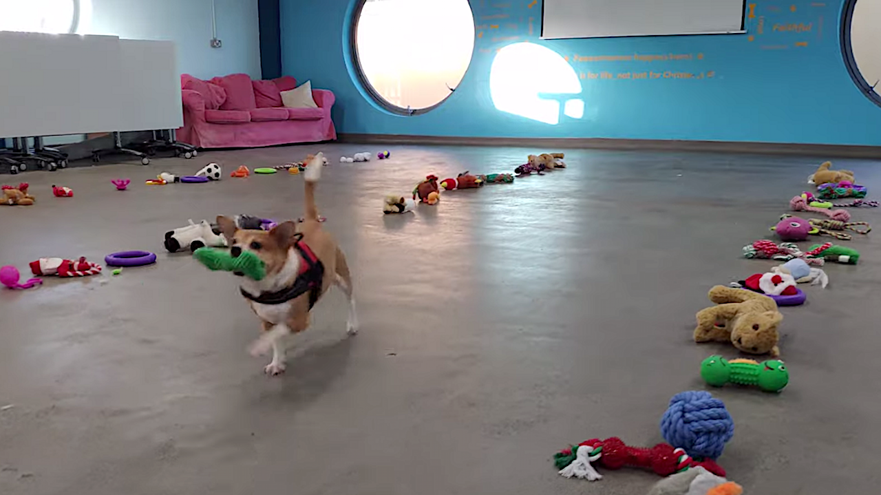 Adoptable Dogs Adorably Pick Out Their Own Christmas Present From Lines of Donated Toys on the Floor
