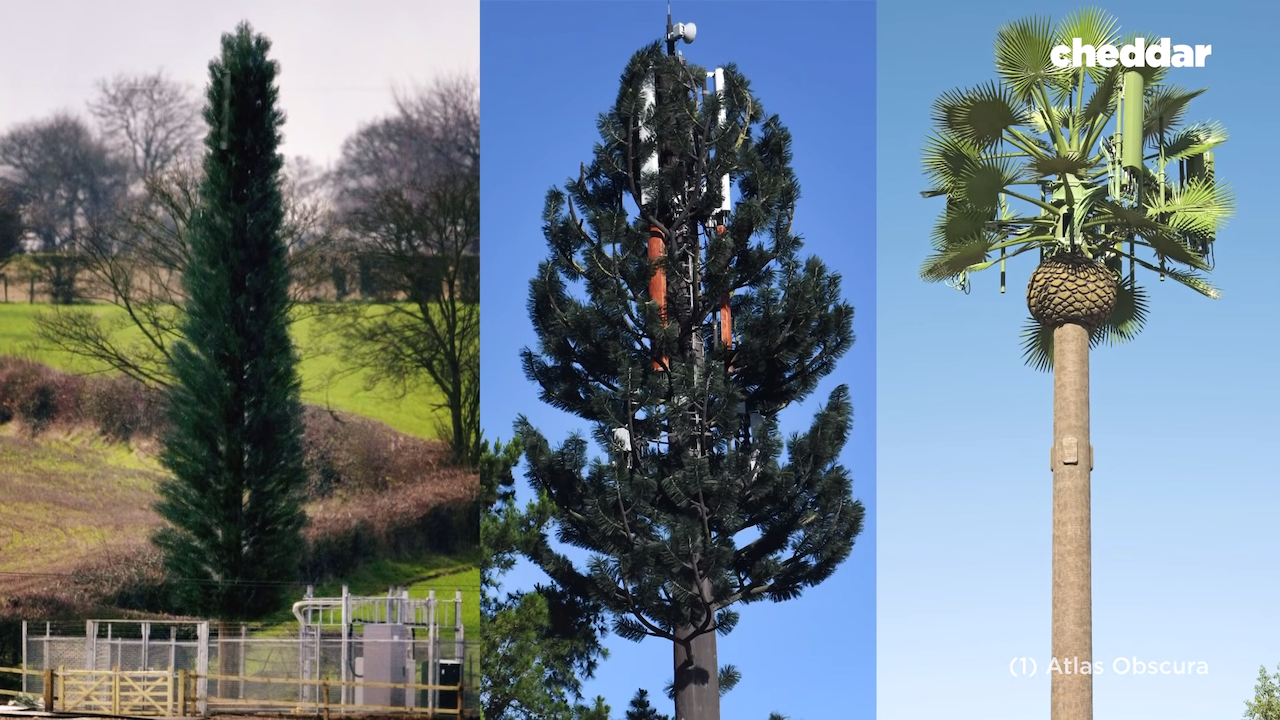 Why Cell Phone Towers Turned Into Fake Trees