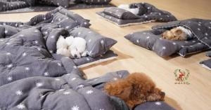 Puppies in Beds