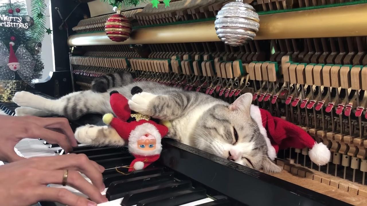Santa Meow wish You a Merry Christmas Haburu Piano Cat