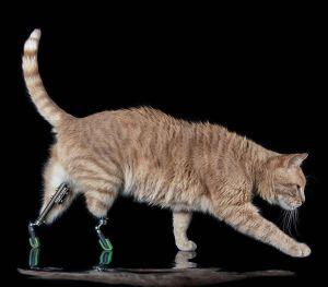 Vituzzo Superstar Bionic Cat