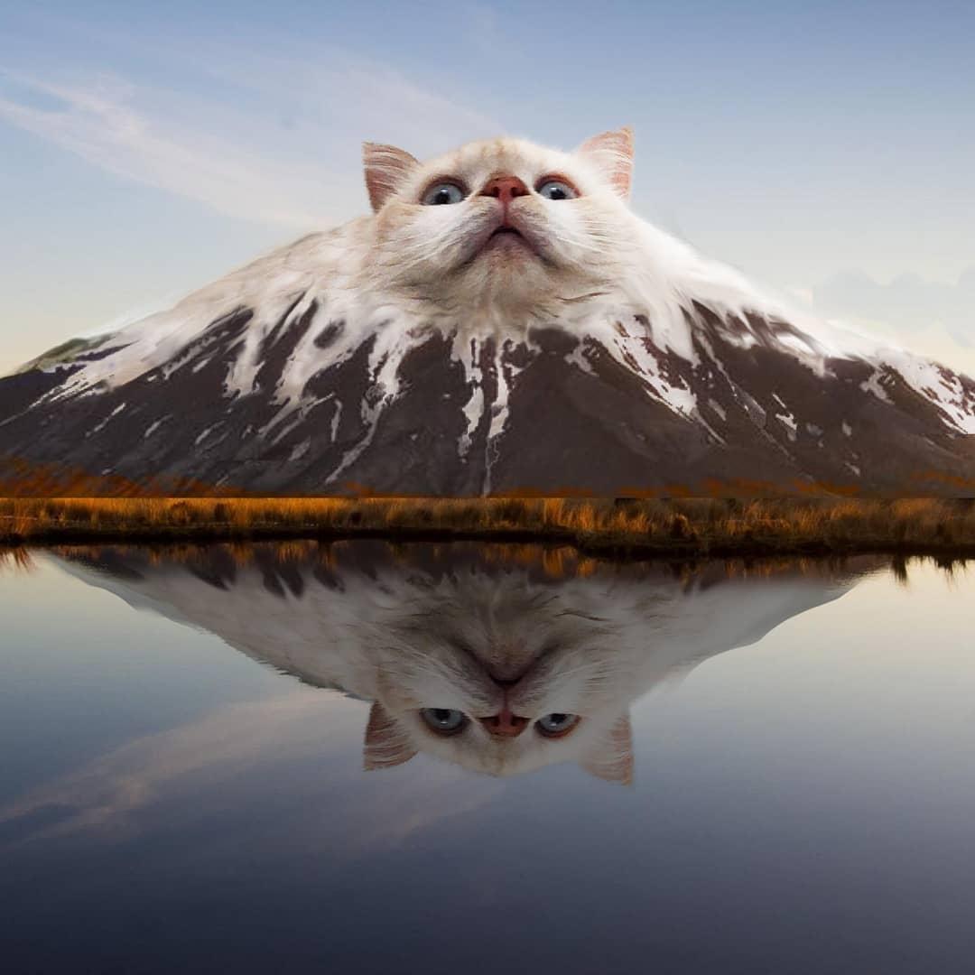 cat mountain animalsinthings