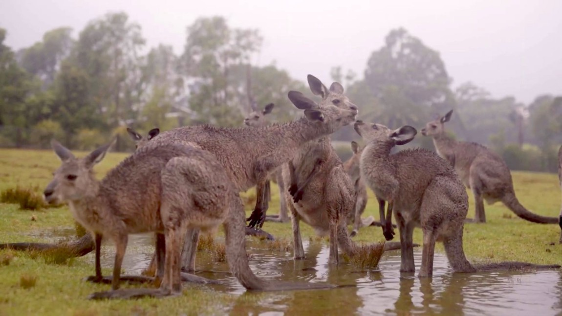 Australian Animals Welcome Rain